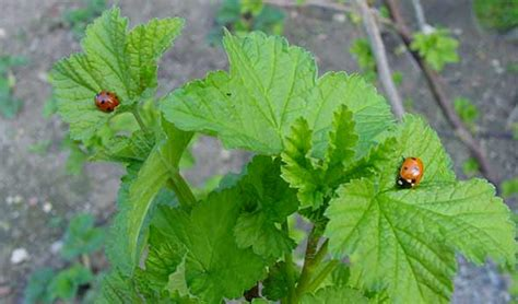 common vegetable garden pests dealing with common garden pests