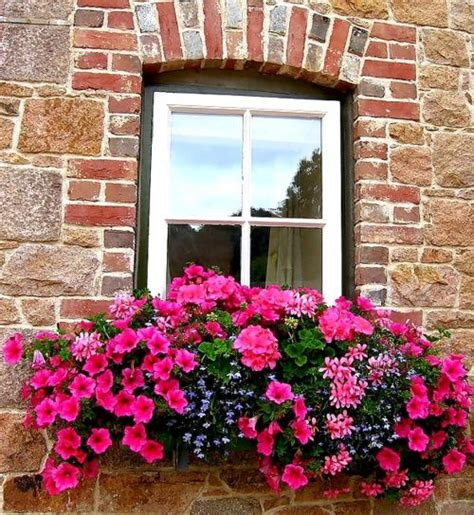 win with flower windows flower boxes and containers pinterest