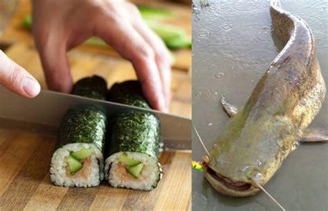 come cucinare il pesce siluro ricetta sushi di siluro montedoglio lo zozzo