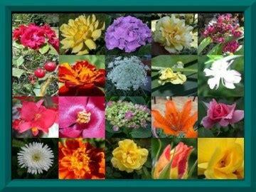 nomi di fiori in inglese impariamo l inglese maestra