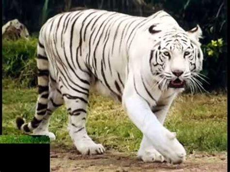 Imagenes De Animales Terrestres | animales terrestres y animales acuaticos youtube