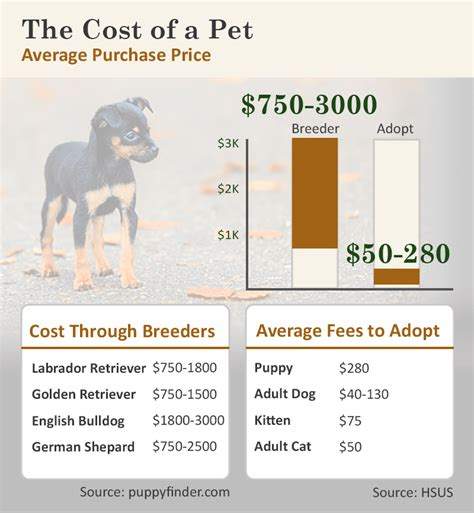 puppy mill vs breeder should you get that pet caring pets