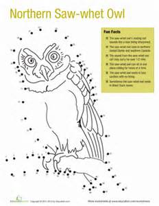 northern saw whet owl facts worksheet education com