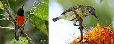 Tempat Burung Bertelur 1 Set Tempat Dan Serat Serat Kasar pengenalan dan perawatan burung madu terpopular di indonesia klub burung