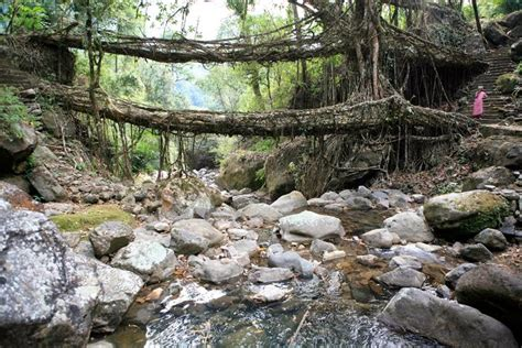 living bridges meghalaya s double decker live root bridges