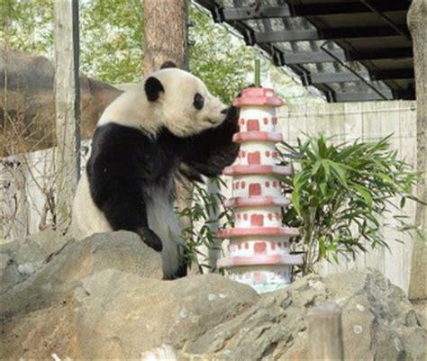 St Panda Biru Kid pet scoop finds missing autistic crowds
