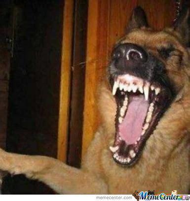 laughing puppy laughing by kiddjuniorr meme center