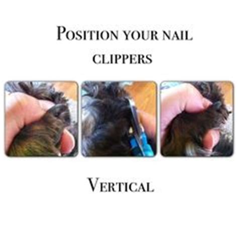 clipping yorkie nails grooming on grooming your and dogs