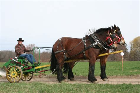 amish plowing with a seven hitch terry joseph and his cedar knoll team at go