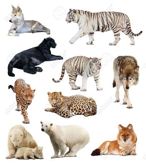 imágenes de animales insectívoros animales carnivoros