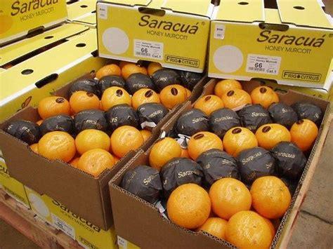 jual buah segar jeruk honey murcott distributor grosir