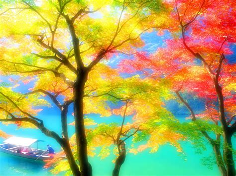colorful tree wallpaper multi color wallpapers wallpaper cave