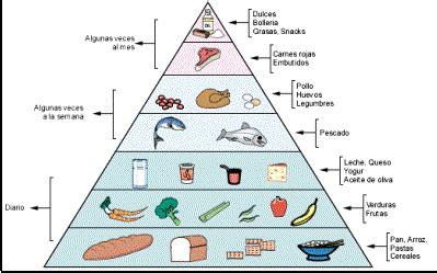cadena alimenticia sencilla para niños vida saludable