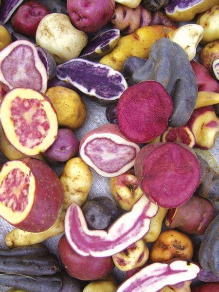 Vitamin Molinfa potato nutrition international potato center
