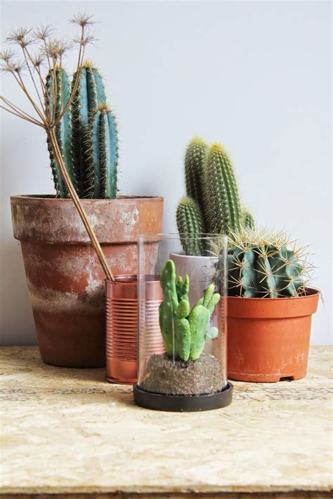 Small Cactus For Desk Boomandyoyo Cactus Leenbakker Desk Workingplace