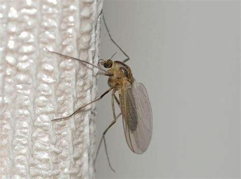 Wodurch Werden Mücken Angezogen by Was Hilft Gegen Stechm 252 Cken Markt De