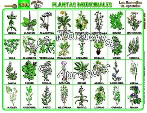imagenes de flores y sus nombres imagenes de plantas medicinales y sus nombres pictures to