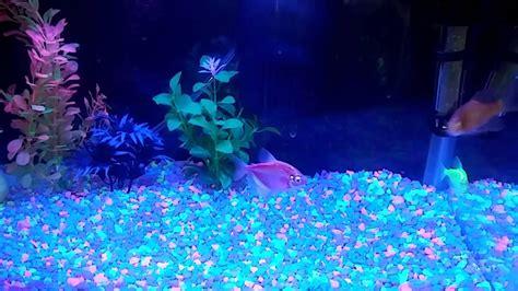 Fish Glow In The glow in the fish tank xander ideas t fish tanks