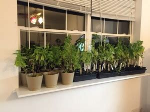 Window Sill Greenhouse Inspiration Humor Inspiration Prepper S Survival Homestead