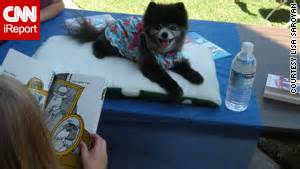 pomeranian therapy learning to read try talking to a cnn