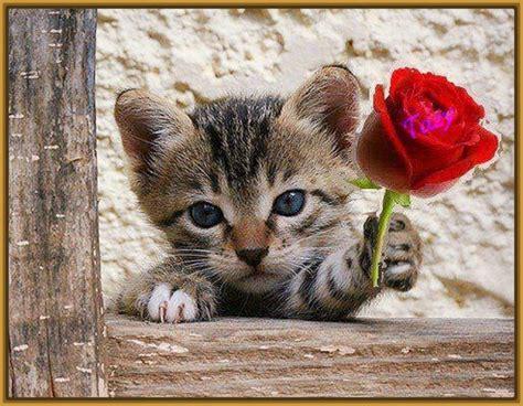 imagenes de jardines con gatos imagenes de gatos con rosas para imprimir gatitos tiernos