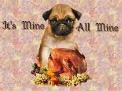 Thanksgiving Pug Pictures Ezthemes Com Free Wallpapers Screen Savers Desktop