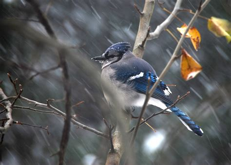4 simple tips for winter bird feeding backyard chirper blog