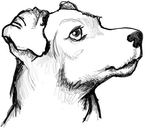 draw  terriers face dogs face  easy steps
