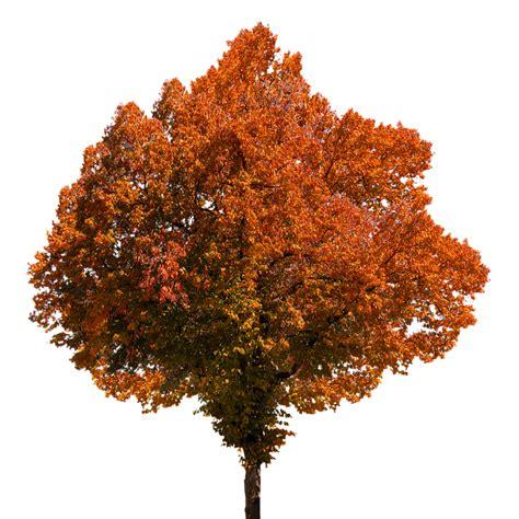 Lime Green Vase Free Illustration Autumn Tree Leaves Color Free