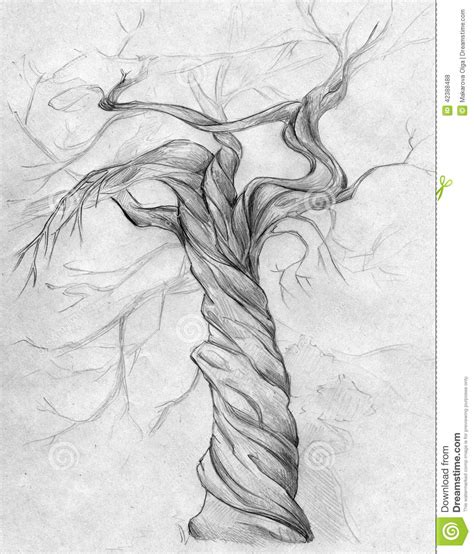 twisted tree stock illustration illustration of boughs