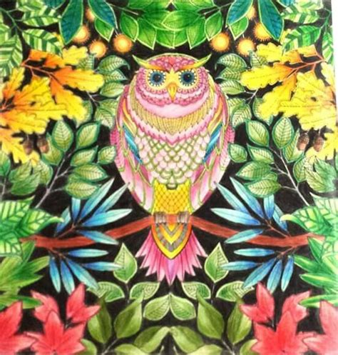secret garden coloring book owl 94 best owl secret garden coruja jardim secreto images on