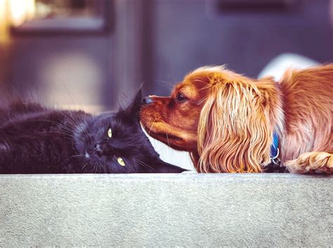 are cats or dogs smarter are dogs smarter than cats science finally has an answer