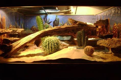 Bearded Dragon Decor Ideas Best 25 Bearded Dragon Terrarium Ideas On Pinterest