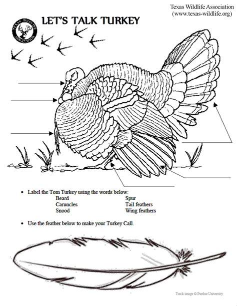 printable turkey body parts let s talk turkey anatomy page texas wildlife