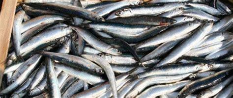don rizzo balestrate balestrate il consumo di pesce povero al centro di un