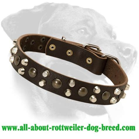rottweiler leather collars order leather rottweiler walking collar brass studs nickel pyramids