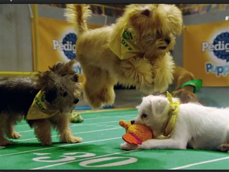 puppy bowl puppy bowl 2017 best moments recap si