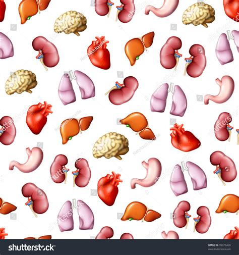 image human pattern internal human organs seamless pattern bitmap copy stock