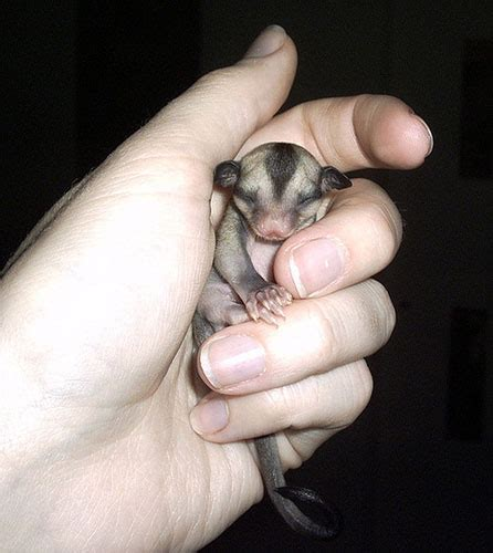 Super Small by Cute Animals Smaller Than Your Finger Weird Hut