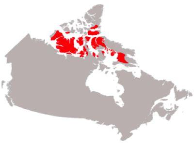 social studies | regions of canada | arctic region