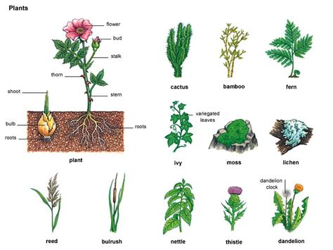 plant 1 noun definition pictures pronunciation and