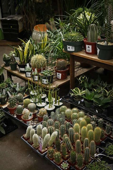 Garden Center San Francisco by Keeping A Nursery Well Stocked Is No Easy Sfgate