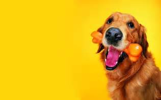dog wallpaper dogs wallpaper 13632654 fanpop