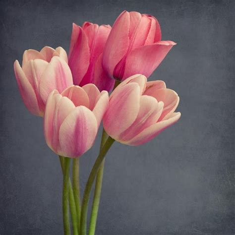 the flowers art and best 25 flower photography ideas on