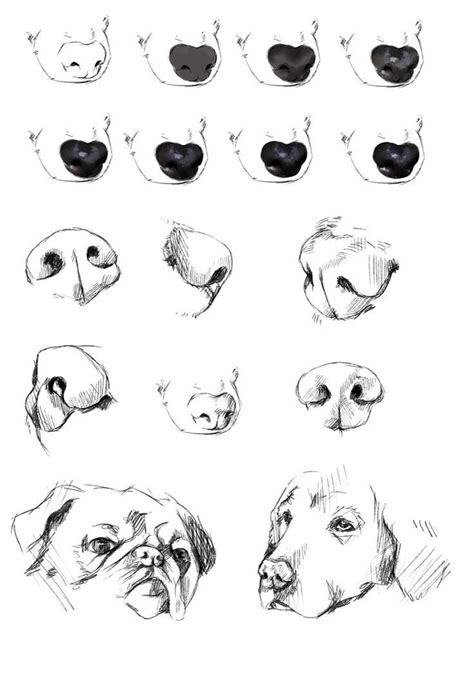 How To Draw Wolf Nose