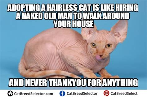 Sphynx Cat Meme - hairless cat memes cat breed selector
