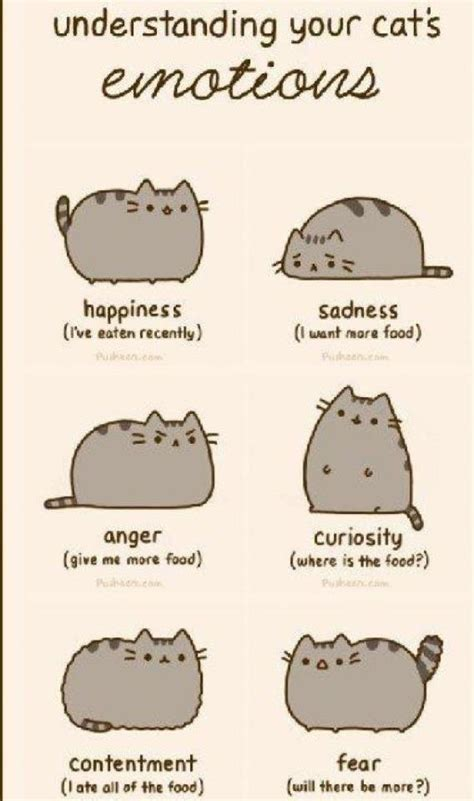 Pusheen Memes - singapore community cats understanding your cat s emotions