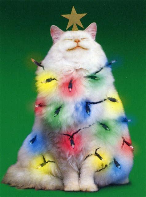 christmas tree kitty festive pinterest