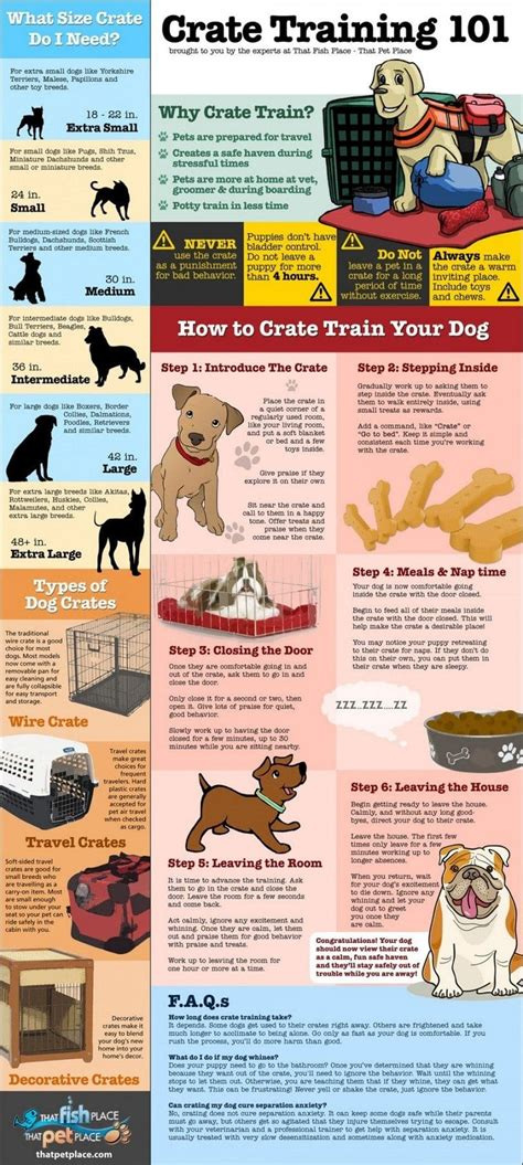 Crate Training | crate training adult dog tips tricks and vet s advices
