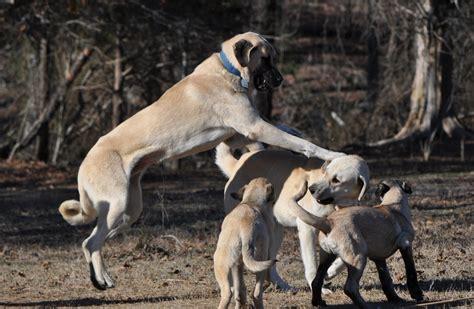 boz dogs katilflying jpg
